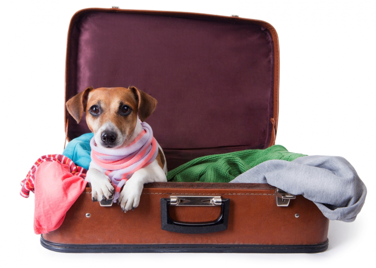 Travel-with-a-pet